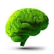 FAME-INNOVA-2017-Cervello-Vegetale-post.jpg
