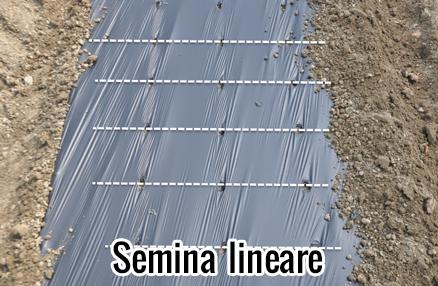 Modula-pro-semina-lineare