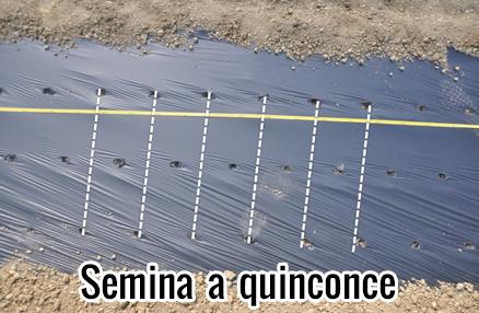 Modula-pro-semina-quinconce