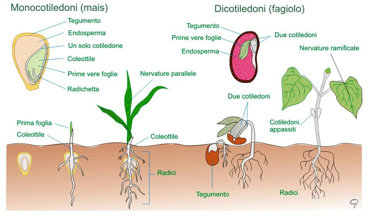 Preparazione-letto-di-semina-germinazione0.jpg