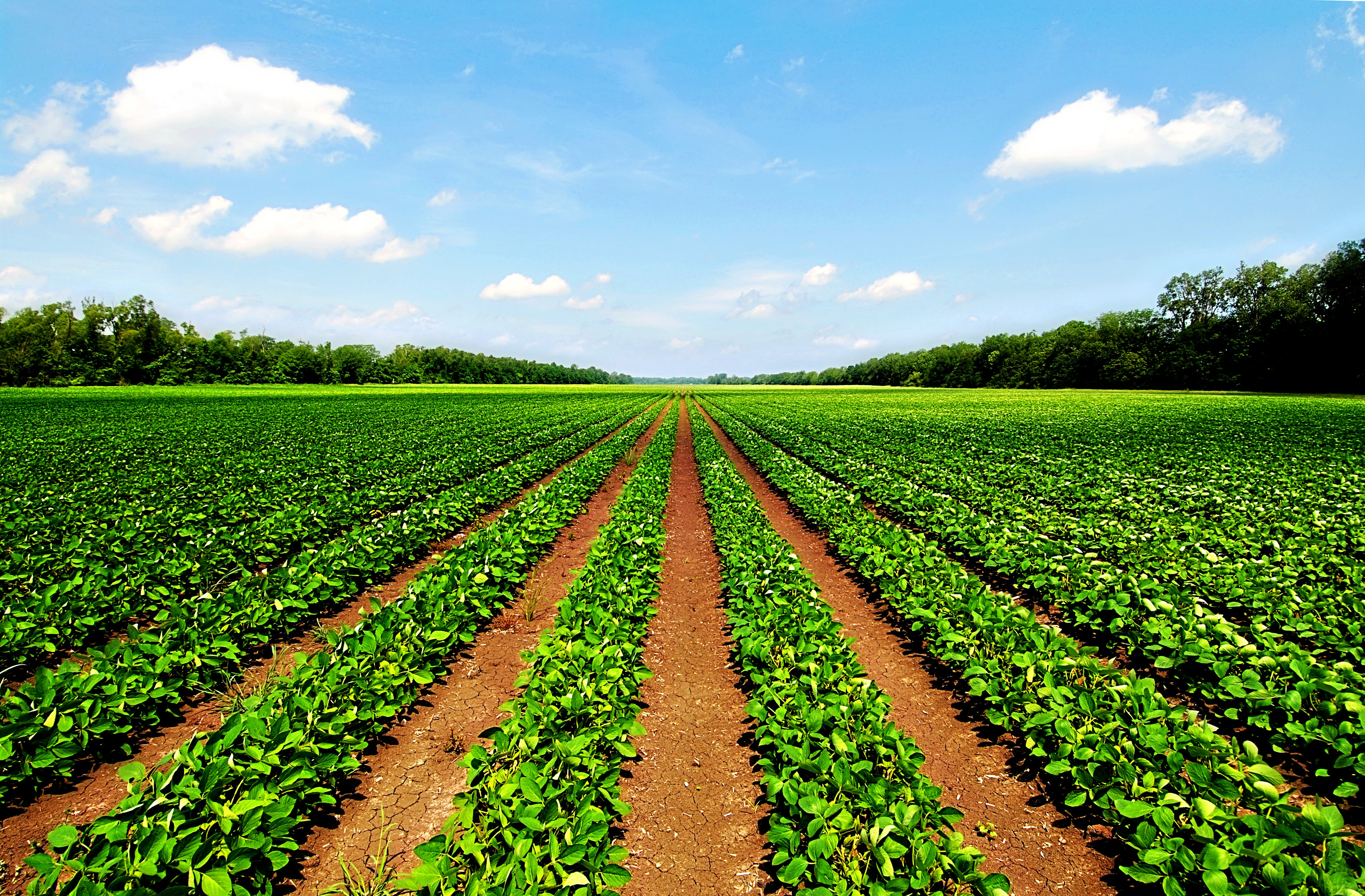 agricoltura-precisione-banner.jpg