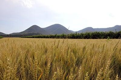 agricoltura-sostenibile-1-1