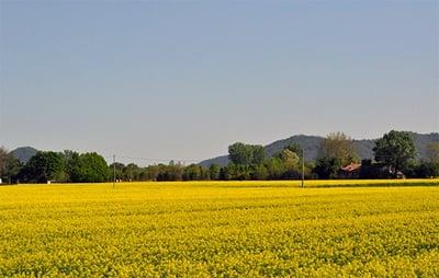 agricoltura-sostenibile-2-1