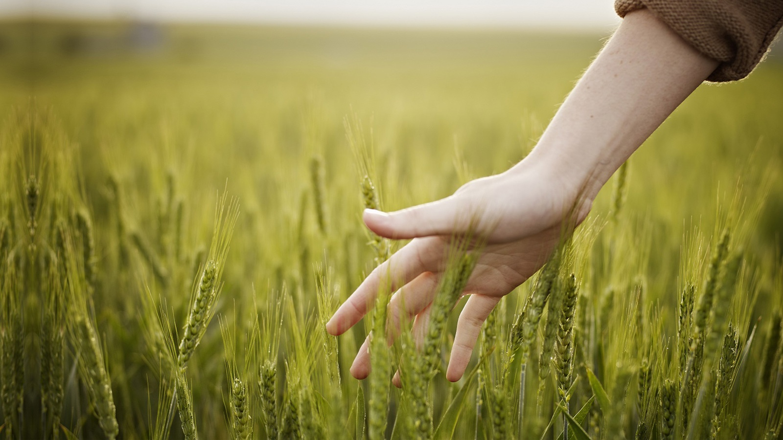 agricoltura-sostenibile-banner.jpg