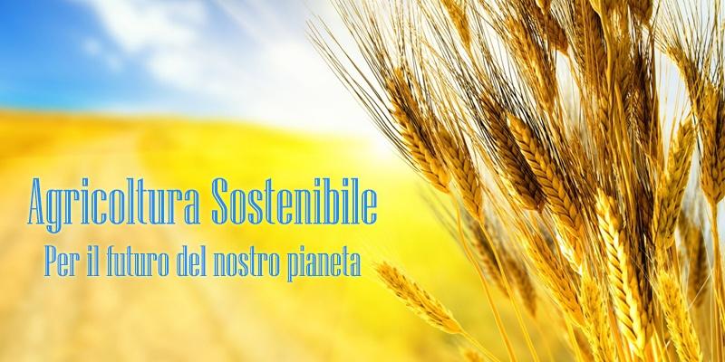 agricoltura-sostenibile.jpg