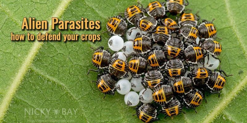 alien-parasites