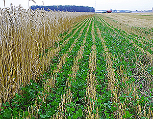 cover-crops2