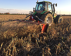 cover-crops4