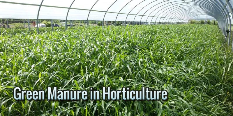 green-manure-horticolture-1