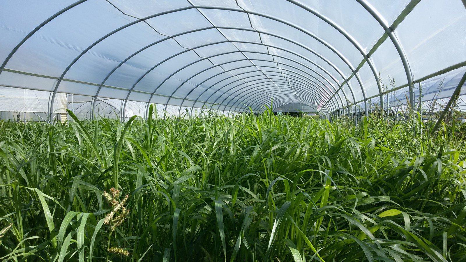 green-manure-horticolture-banner