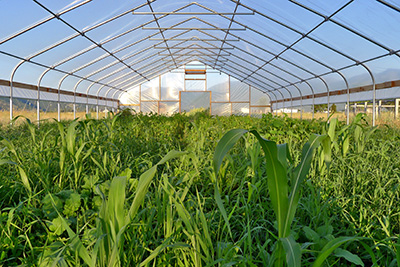 green-manure-horticolture-tunnel