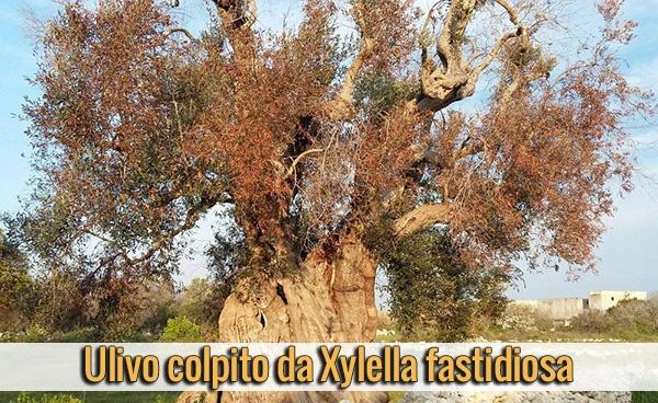 parassiti-alieni-ulivo-colpito-da-Xylella-fastidiosa