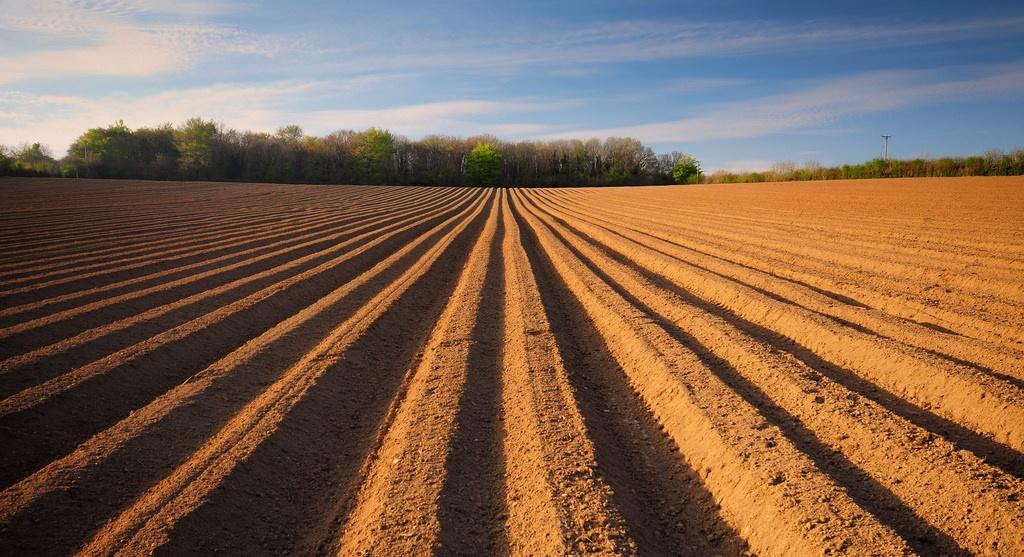 seedbed-preparation-banner.jpg