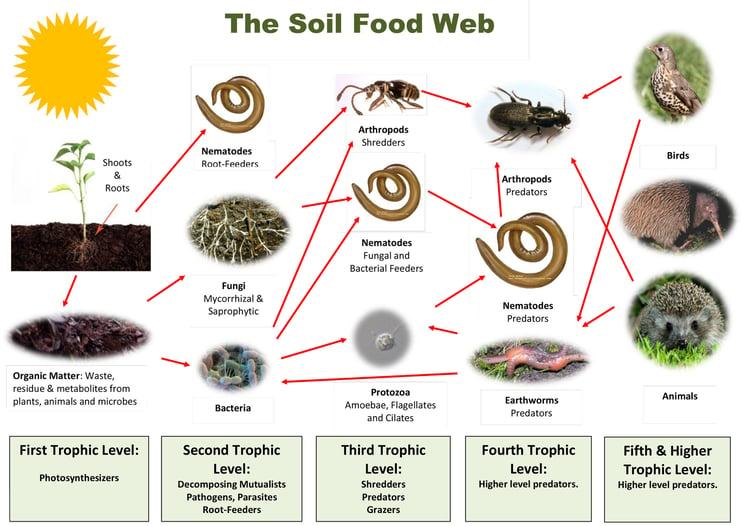 stanchezza-del-terreno-soil-food-web.jpg