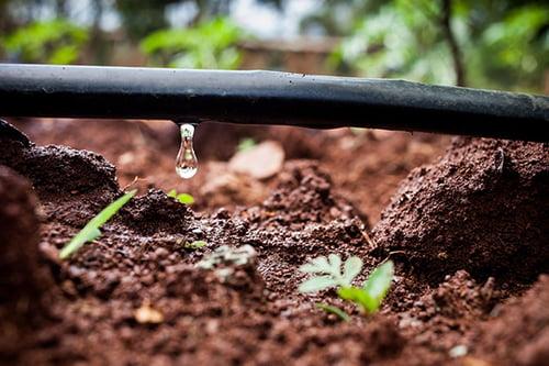 water-saving-drip-irrigation-in-kenya