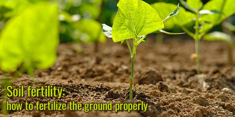 Soil fertility: how to fertilize the ground properly