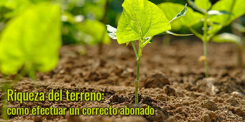 Riqueza del terreno: como efectuar un correcto abonado