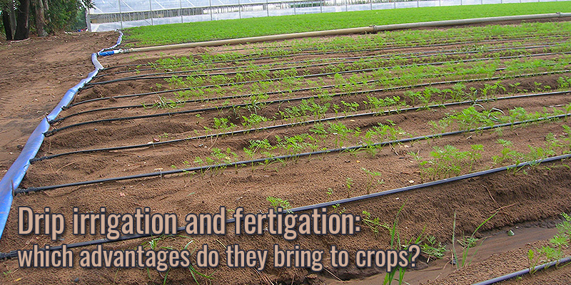 Drip irrigation and fertigation: which advantages do they bring to crops?