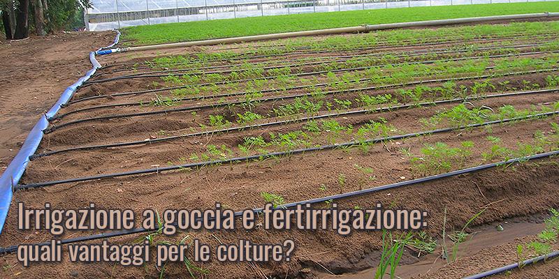 Irrigazione a goccia e fertirrigazione: quali vantaggi per le colture?
