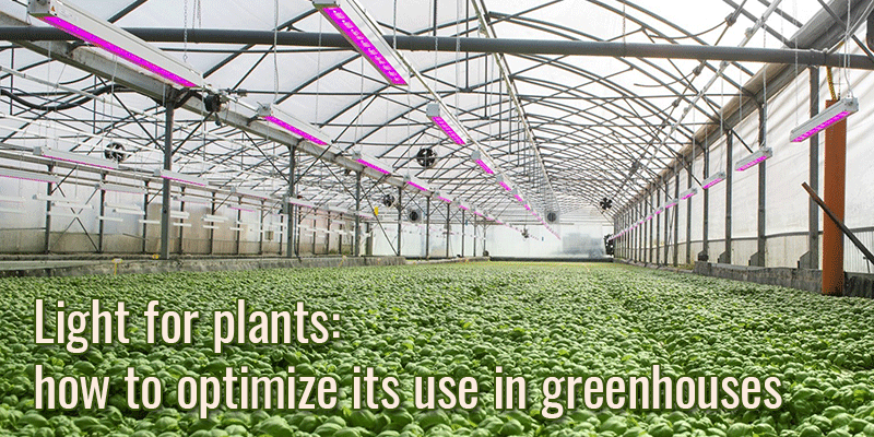 Light for plants: how to optimize its use in greenhouses