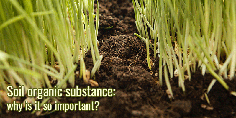 Soil organic substance: why is it so important?