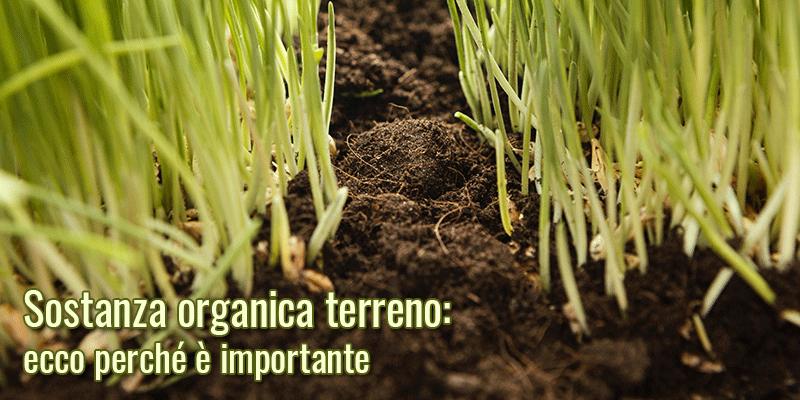 Sostanza organica terreno: ecco perché è importante