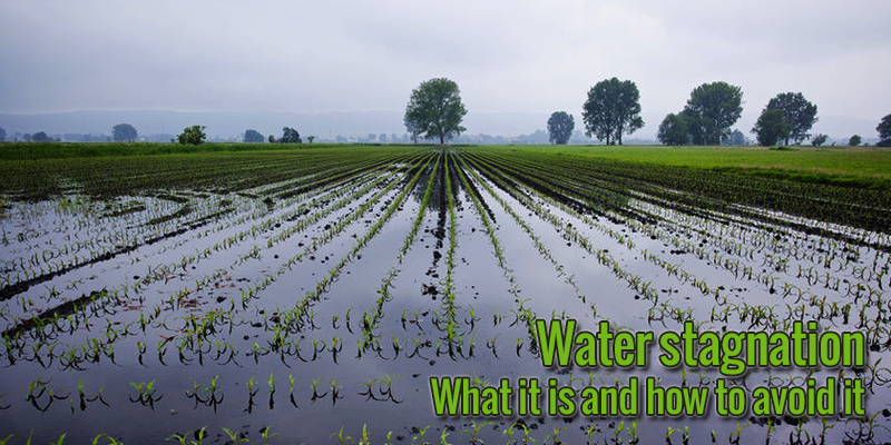 Water stagnation: what it is and how to avoid it