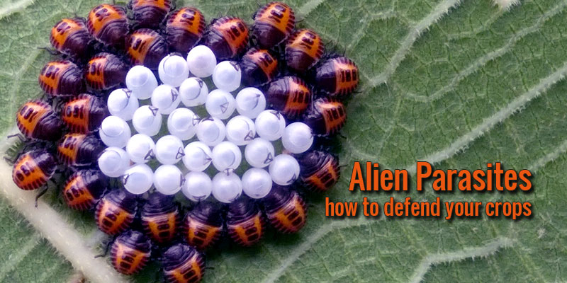 Alien Parasites: how to defend your crops