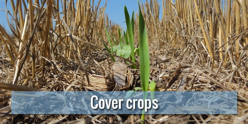 Cover crops: what they are, how to produce them and what kind of benefits they provide