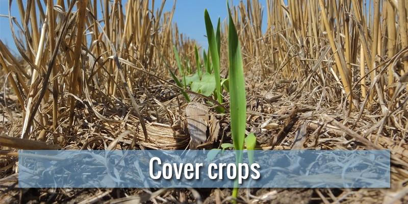 Cover crops: cosa sono, come si fanno e quali benefici apportano