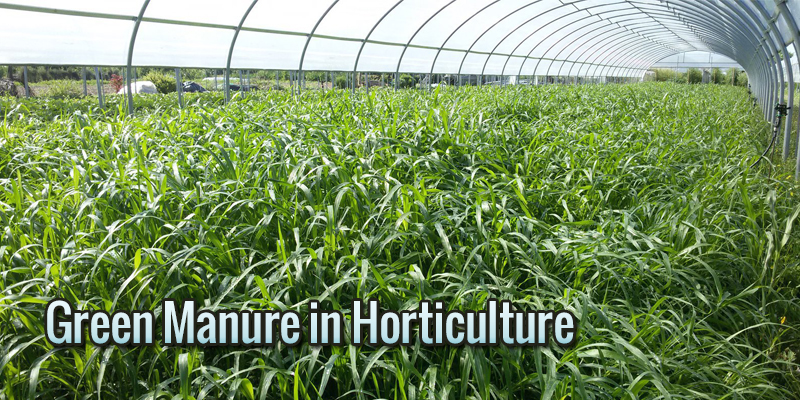 Green Manure in Horticulture: how, when and why