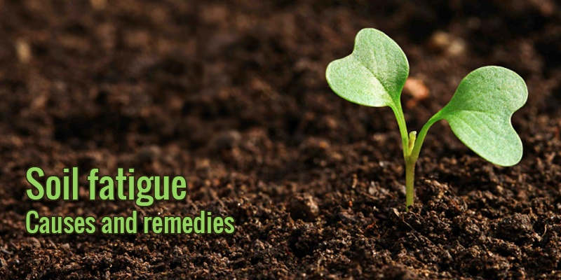 Soil fatigue? Discover causes and expert's remedies
