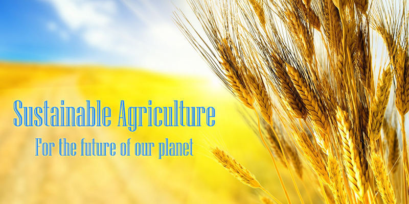Sustainable Agriculture: For the future of our planet